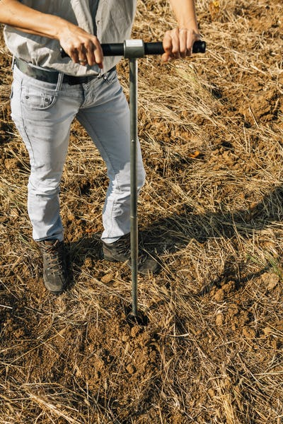 Soil Sampling. Agronomist Taking Sample With Soil Probe Sampler