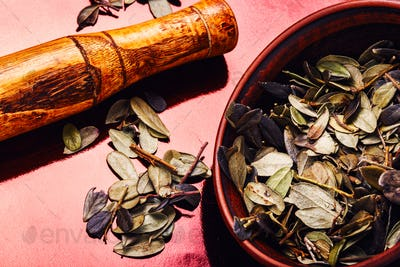Cowberry leaf.Herbal medicine