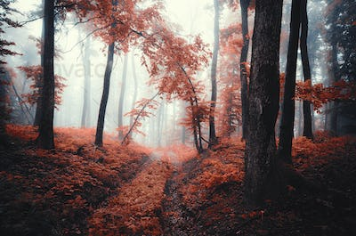 vivid surreal autumn landscape. Forest path and trees in fog