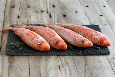Fresh raw surmullet fish
