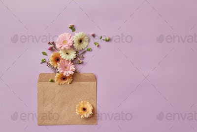 Beautiful flowers gerbera of pastel colors are inserted into the envelope and sent by mail on a pink