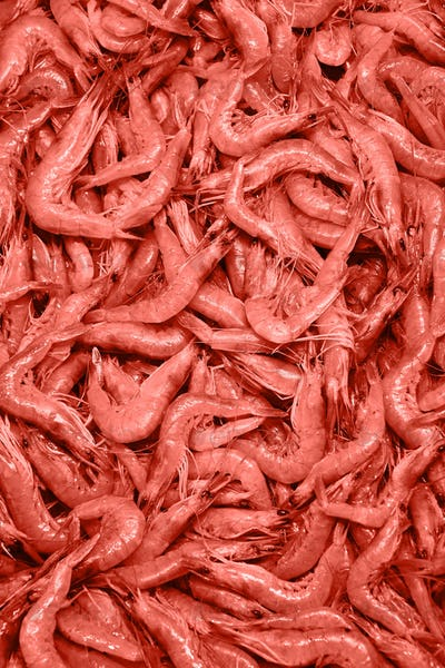Natural fresh raw shrimp background in a pantone trendy color of the year 2019 Living Coral