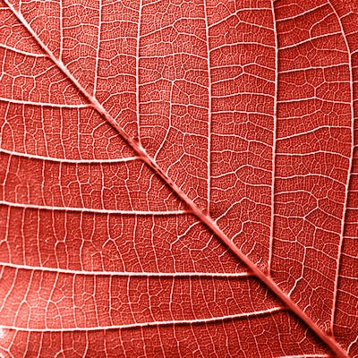 Macro photo of natural pattern of leaf with veins. Creative background for your ideas in a color of