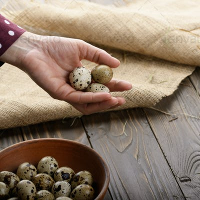 Fresh organic quail eggs in woman hands over wooden rustic kitch