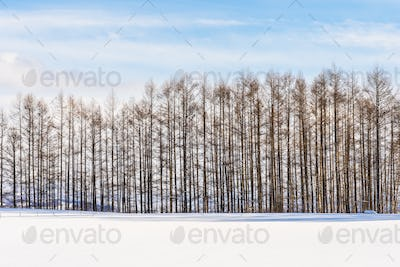 Beautiful outdoor nature landscape with group of tree branch in