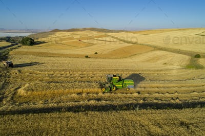 Wheat Harves