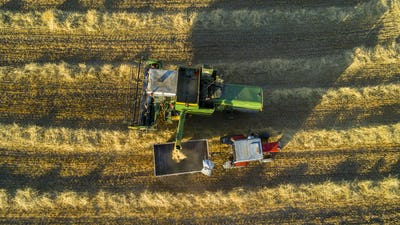 Modern Combine Harvester Gathers The Wheat Crop In