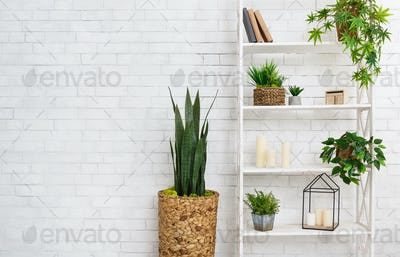 Succulent and various plants over white wall