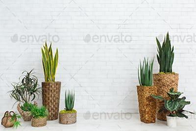 Succulents in DIY pots in scandinavian style home