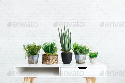 Collection of various plants in different pots