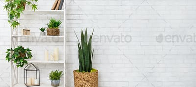 Bookshelf with succulent and various houseplants over wall