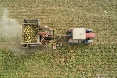 Harvester Working On Beet Field