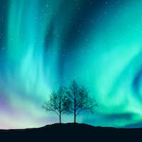 Aurora borealis and silhouette of the trees on the hill