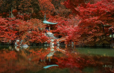 autumn foliage at Daigo ji temple, Kyoto, Japan