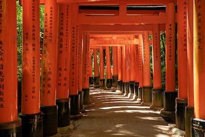 Torii gates in Fushimi Inari in Kyoto