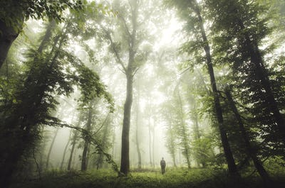 Man in nature. Natural forest landscape on rainy weather with lu