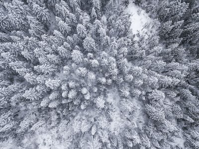 Aerial straight down view of snow covered trees in the Sierra Ne
