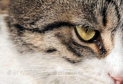 Sweet Animal Pet Cat
