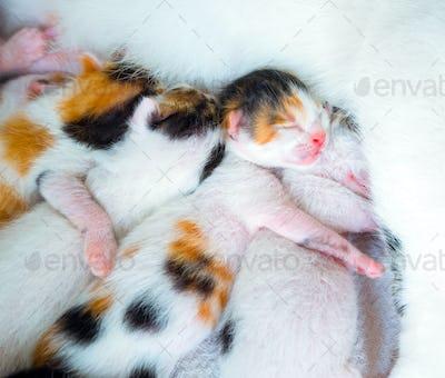 Cute Sweet Pet Animal Kitty