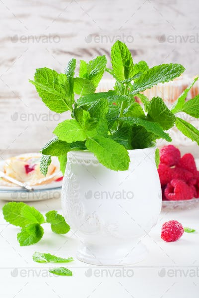 Fresh mint in white vase