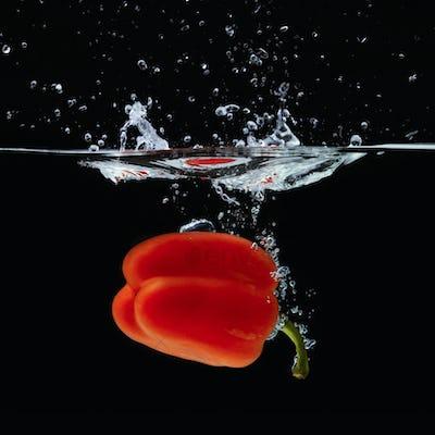 Colored orange paprika in water splashes on black background