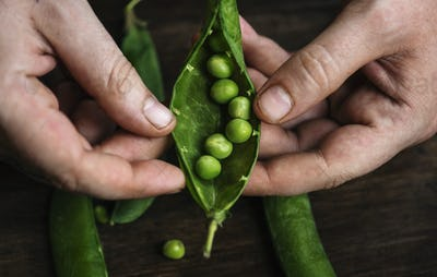 Close up of a man holding raw green peas