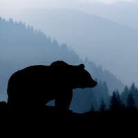 Bear silhouette on mountains background