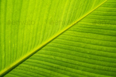texture detail of green tropical leaf