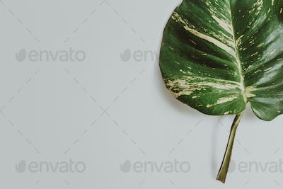 tropical leaves on grey background