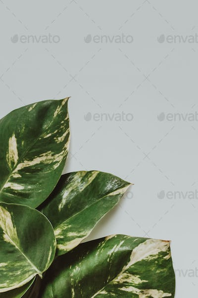 tropical leaves nature layout