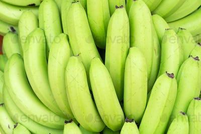 Green bunches of Cavendish banana-5