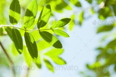 Green leaves over blue sky