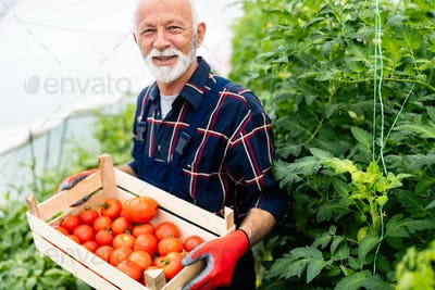 Friendly mature farmer at work in greenhouse