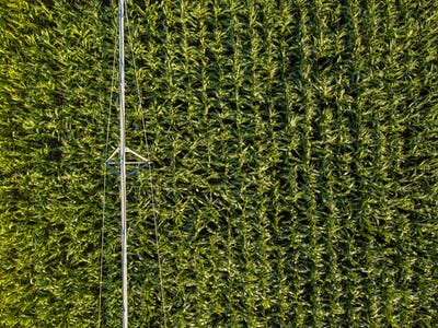 Drone photography, aerial view of irrigation system in cornfield