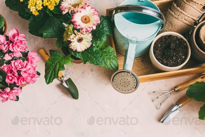 Watering can with gardening tools and various flowers