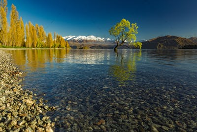 The Lonely tree of Lake Wanaka and snowy Buchanan Peaks, South I