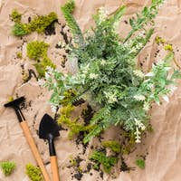 Small plant and gardening tools, top view