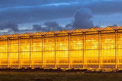 Illuminated industrial greenhouse