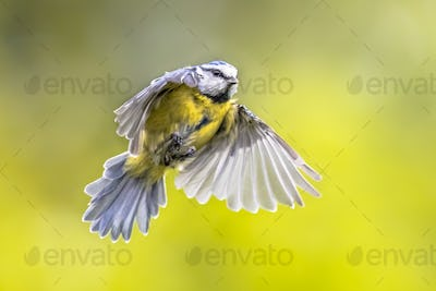 Flying bird on bright green background