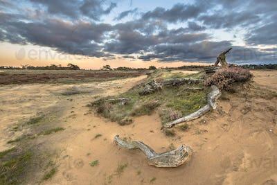 Sunset over logs in sand dunes of Hoge Veluwe