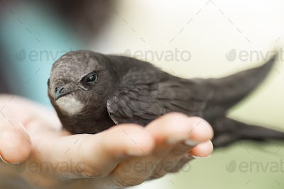 Bird in Woman Hand Outdoors on Nature