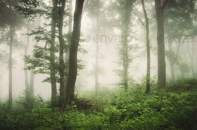 natural green forest with lush vegetation in summer