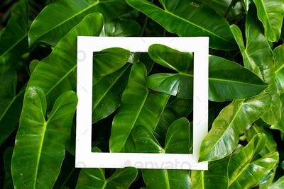 tropical leaf texture with design