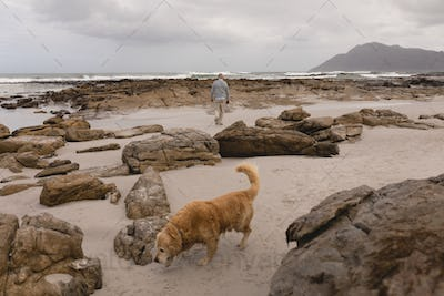 Wide view of Active senior walking on a beach with his dog