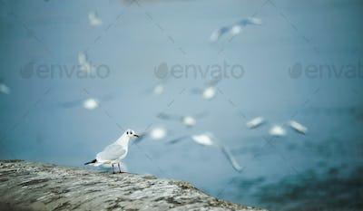 Beautiful seagulls flying