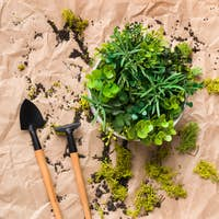 Border of mini plant and gardening tools, top view
