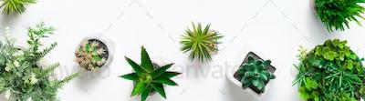 Decorative plants in concrete pots, top view