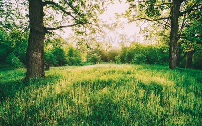 Summer Sunny Deciduous Forest Trees And Green Grass. Nature, Woo