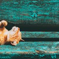 Red kitten cat sleeps on a bench in park