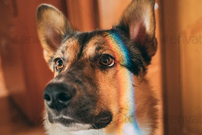 Reflection Of A Multi-colored Rainbow On The Face Of A Dog. Mixe